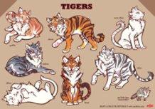 COLOR TIGERS