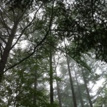 """""""Watashi No Mori (My Forest)"""" (short ver.) / Sora Yuizuki"""