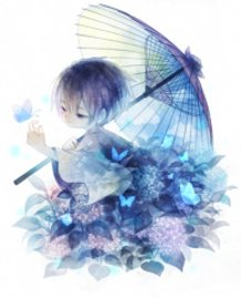 Hydrangea boy